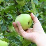 Group logo of Fruit & Vegetable Picking
