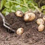 Group logo of Potato Picking